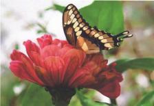 ButterflyCard.jpg