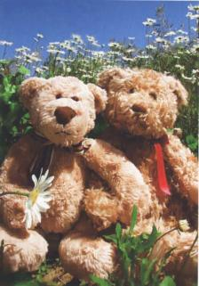 TeddyBearCard.jpg