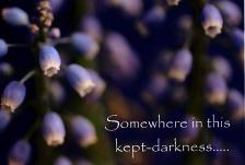 Somewhere in this kept-darkness Greeting Card